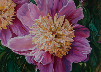 One and a half Bright Pink Peonies
