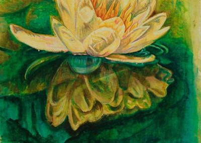 Yellow Lily Reflected
